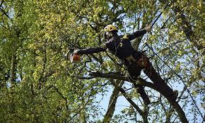 Tree Surgeons Coatham Mundeville Teesside